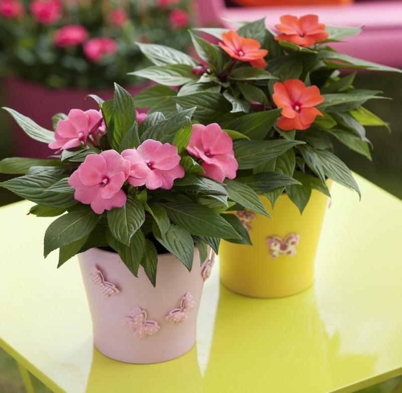 Неприхотливые и красивые комнатные цветы
